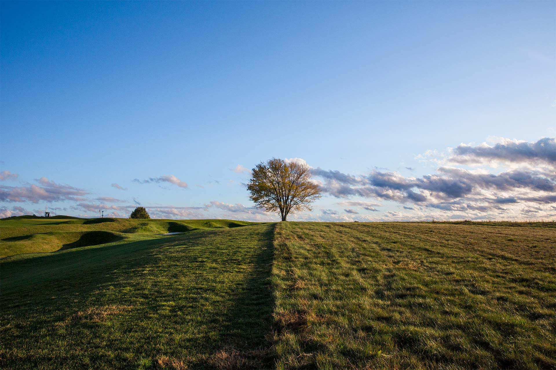 one tree in a large empty field