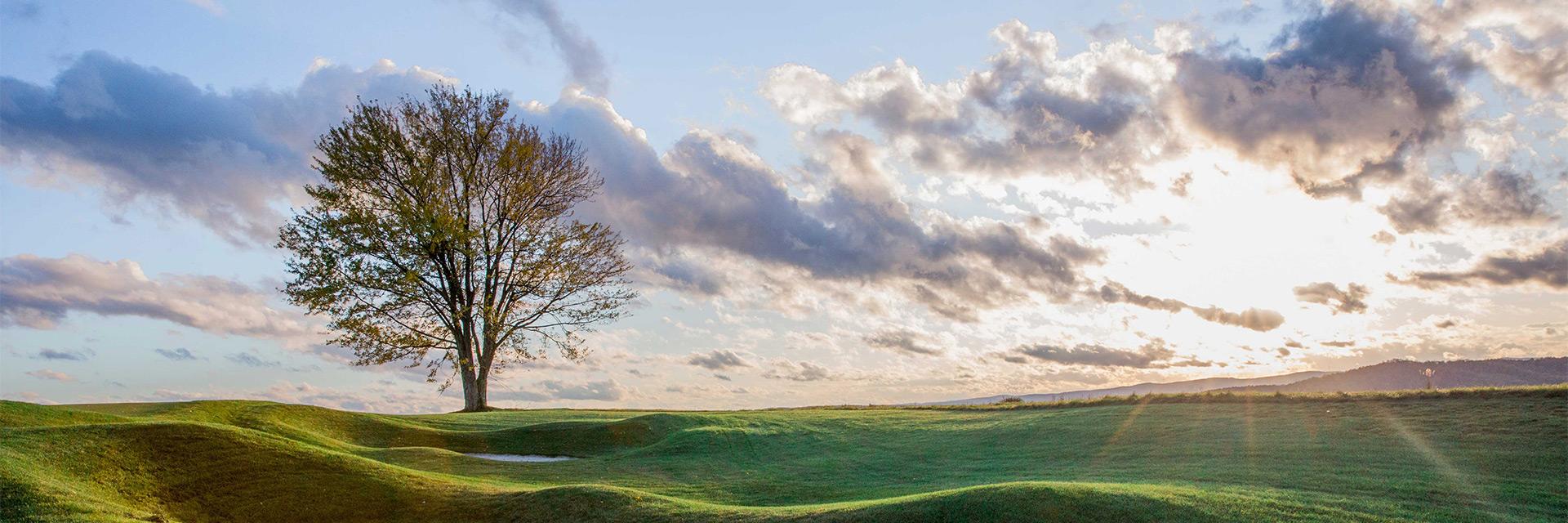 lone tree in large grassy field